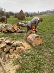 Ioan uses a chain saw before chopping the wood into firewood.