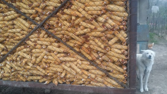 Field corn is kept in a raised storage bin.